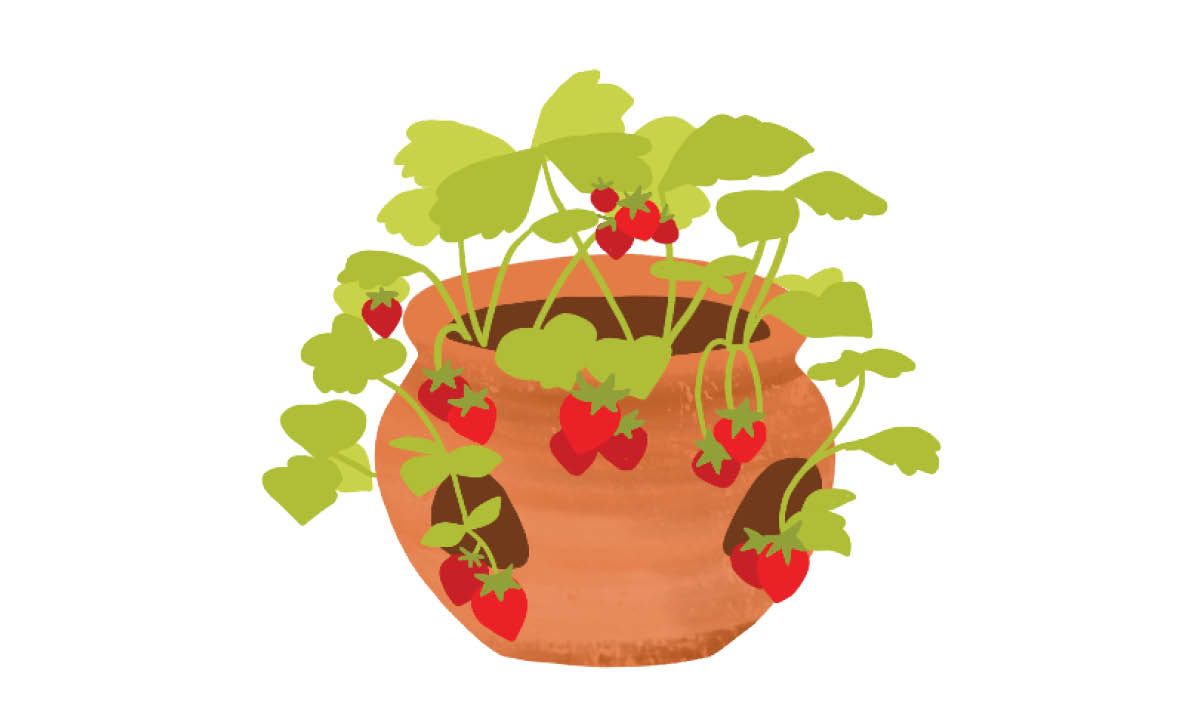 Plants to Grow with Kids - Strawberries